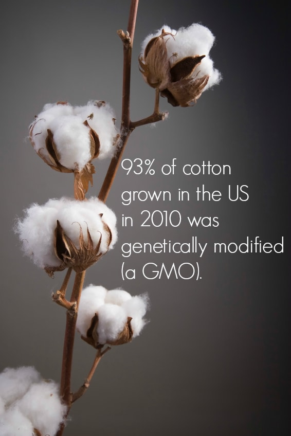 The Importance of Organic Cotton via www.DeliciouslyOrganic.net
